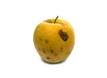Rotten apple Stock Images