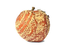 Rotten Apple On White Background Stock Images