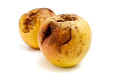 Rotten apples Stock Image