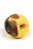 Rotten apples Royalty Free Stock Photography