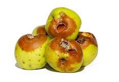 Rotten apples Stock Photos