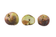 Rotten apples. Three rotten apples on a white background Stock Photos