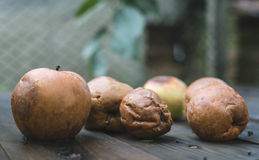 Rotten apples on wood Royalty Free Stock Photos