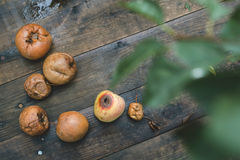 Rotten apples on wood Stock Images