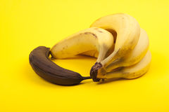 Rotten banana beside bunch of ripe bananas, yellow background Royalty Free Stock Image