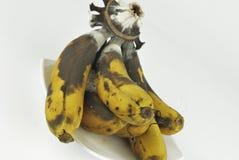 Rotten banana with fungus Stock Photography