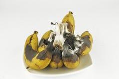 Rotten banana with fungus Royalty Free Stock Photography