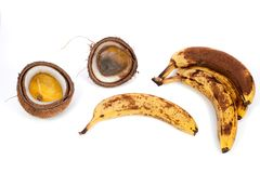 Rotten bananas and coconut. Wasted tropical food rotting with fungus. stock photography