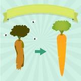 Rotten carrot Royalty Free Stock Photo