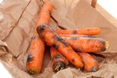 Rotten carrots. Wasted black and mouldy vegetables. Gone off foo Royalty Free Stock Photography