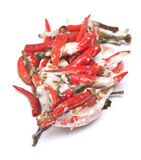 Rotten chili pepper Royalty Free Stock Photo