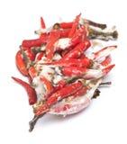 Rotten chili pepper Royalty Free Stock Photo