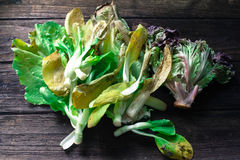 Rotten chinese cabbage and lettuce on wooden backg Stock Photo