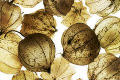 Rotten chinese lantern detail Royalty Free Stock Photography