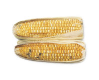 Rotten corn Royalty Free Stock Photography