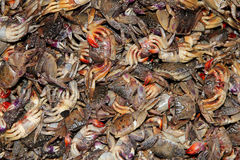Rotten crabs Royalty Free Stock Photo