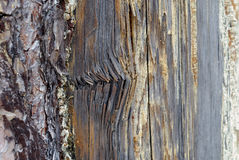 Rotten damaged wood texture Stock Photos