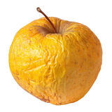 Rotten dry disgusting apple on white background Royalty Free Stock Photos