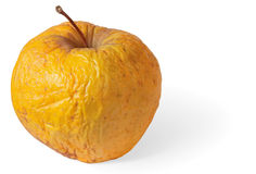 Rotten dry disgusting apple on white with shadow Royalty Free Stock Image