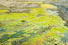 Rotten drying swamp Stock Photo