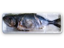Rotten fish. Household labelling lifestyle nose  one Royalty Free Stock Image