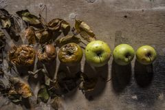 Rotten and fresh apple on background of wooden plank stock photo