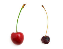 Rotten and fresh sweet cherries Stock Photography