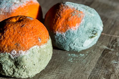 Rotten and fresh tangerine fruit with mold. Royalty Free Stock Photo