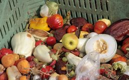 Rotten fruit and vegetables used as manure in a farm Royalty Free Stock Images