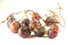 Rotten grape Stock Image