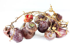 Rotten grape Stock Photography