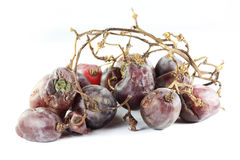 Rotten grape Royalty Free Stock Images