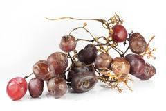 Rotten grape Royalty Free Stock Image