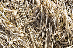 Rotten grass. Dry spring old Rotten grass Royalty Free Stock Photography