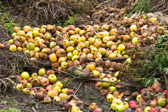 Rotten green and yellow apples with other waste Royalty Free Stock Photo