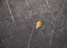 A Rotten Leaf Royalty Free Stock Image