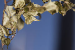 Rotten leaf Stock Photo