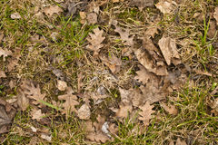 Rotten leaves Royalty Free Stock Photos