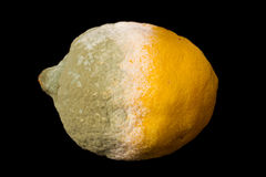 Rotten lemon Stock Image