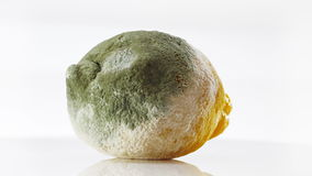 Rotten lemon covered with mold rotating over white stock video footage