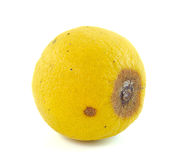 Rotten Lemon fruit  on white Royalty Free Stock Photography