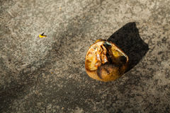Rotten lemon. stock photo