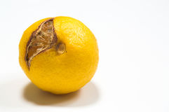 Rotten lemon isolated o white justified left Stock Photos