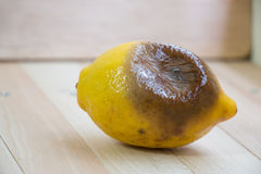 Rotten lemon put on wooden table Stock Photography