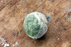 Rotten lemon Royalty Free Stock Image