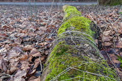 Rotten Log filled with moss and other plants growing Stock Photo