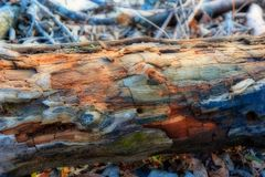 Rotten log on the ground with a HDR process stock photography