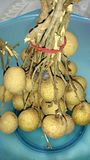 Rotten Longan fruits Royalty Free Stock Image