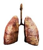 Rotten lungs vector illustration