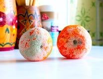 Rotten mandarin. Stock Photo